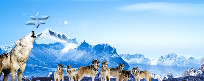 打造狼一样的团队_狼团队图片大全_团队图片大全,团队激励图片大全图片